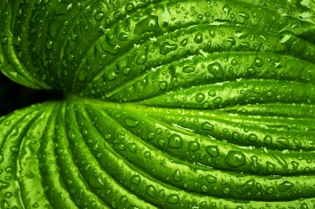 leaf-749929_1280