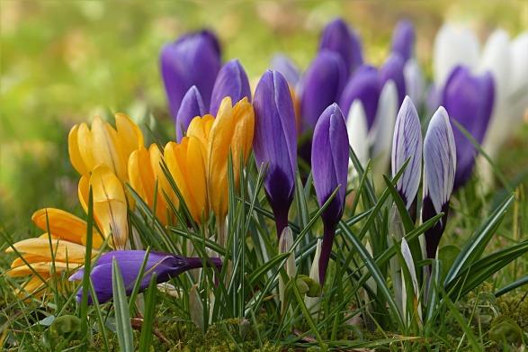 touchstone spring fling